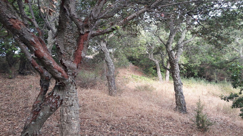A VENDRE ST AYGULF TRES BELLE VUE MER